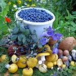 фестиваль грибов и ягод