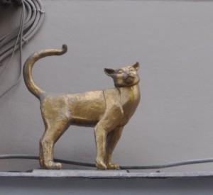Коты-DSC_0086