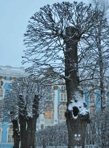 деревья-ЦАРСКОЕ-СЕЛО-декабрь-2013-313